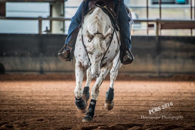 Concentric - Australian Coloured Performance Horses